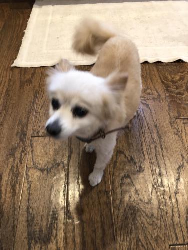 Found/Stray Female Dog last seen Alaminos dr Saugus, Santa Clarita, CA 91350