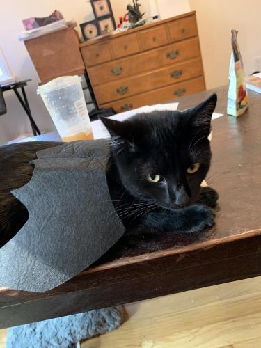 Lost Female Cat last seen Tuller Ave / Washington Pl, Culver City, CA 90230