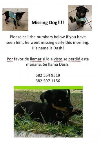 Lost Male Dog last seen Carter street, Arlington, TX 76010