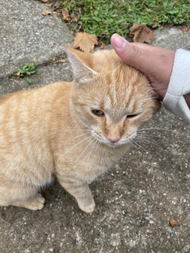 Found/Stray Male Cat last seen Near parkgate and parkside , Cleveland, OH 44108