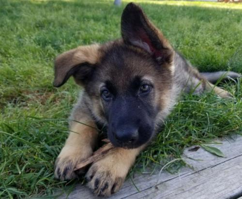 Lost Female Dog last seen Atlantic  and alondra , Compton, CA 90221
