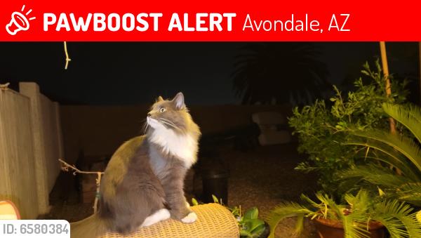 Lost Unknown Cat last seen Fawn Ln Garden Lakes - Lakeshores , Avondale, AZ 85392
