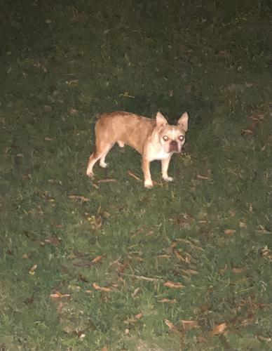 Lost Male Dog last seen Portsmouth Blvd/Dock Landing Rd, Chesapeake, VA 23321