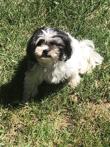Lost Female Dog last seen Gentry Golf Course and Scott's Corner , Princeton Meadows, NJ 08536