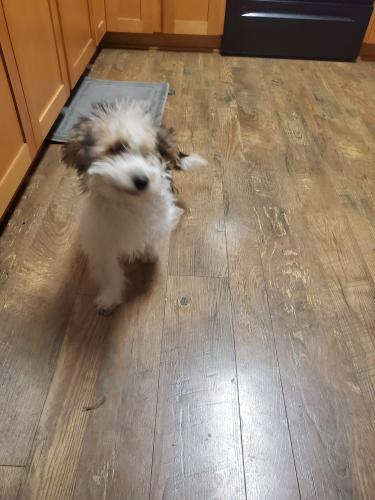 Found/Stray Male Dog last seen Stancil and appian ave, Virginia Beach, VA 23452