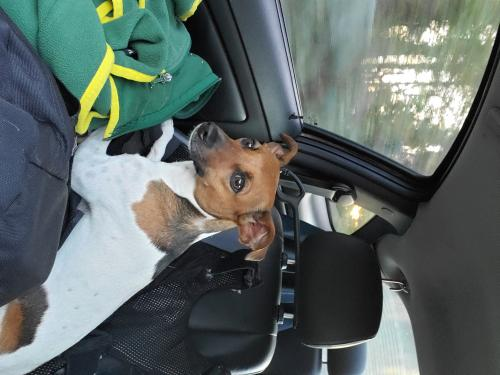 Found/Stray Female Dog last seen Benefit rd, Chesapeake, VA 23322