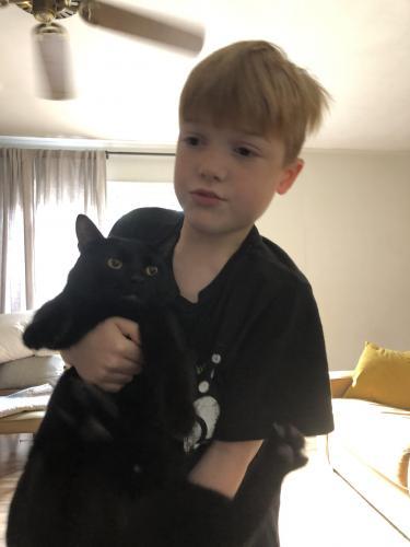 Lost Male Cat last seen North plantation drive, Virginia Beach, VA 23454