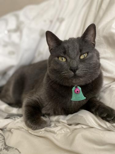 Lost Female Cat last seen Obannon , Las Vegas, NV 89146