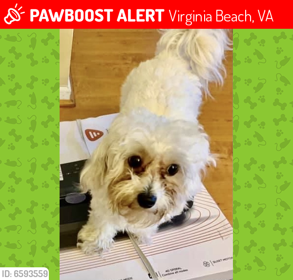 Lost Female Dog last seen City of Virginia Beach Fire Station 19 - Stumpy Lake, Virginia Beach, VA 23464