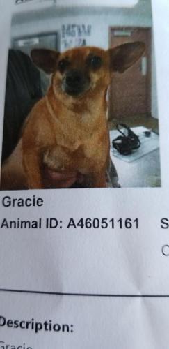 Lost Female Dog last seen Hanley , Fort Worth, TX 76112