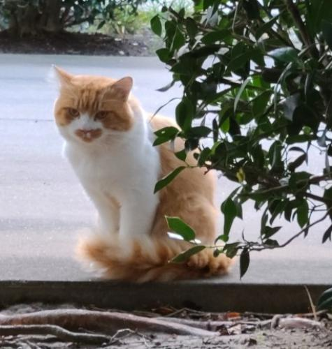 Found/Stray Unknown Cat last seen South Plaza Trail and Princess Anne  23462, Virginia Beach, VA 23462