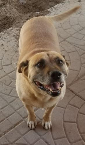 Lost Male Dog last seen 47th Ave and Glendale, Glendale, AZ 85301