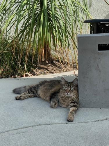 Lost Female Cat last seen On Bennett Ave between 3rd and Vista, Long Beach, CA 90803