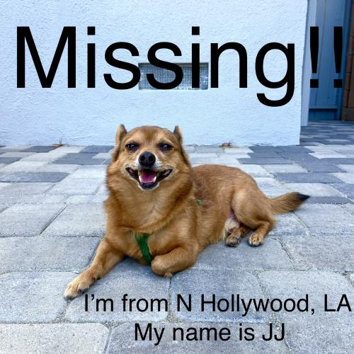 Lost Male Dog last seen N Hollywood, Los Angeles, CA 91601