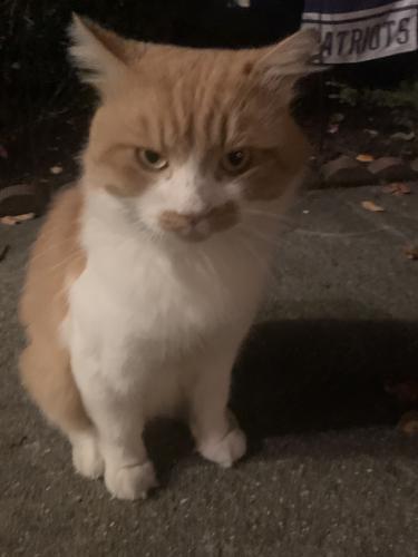 Found/Stray Unknown Cat last seen Nichols Ridge Rd., Virginia Beach, VA 23462