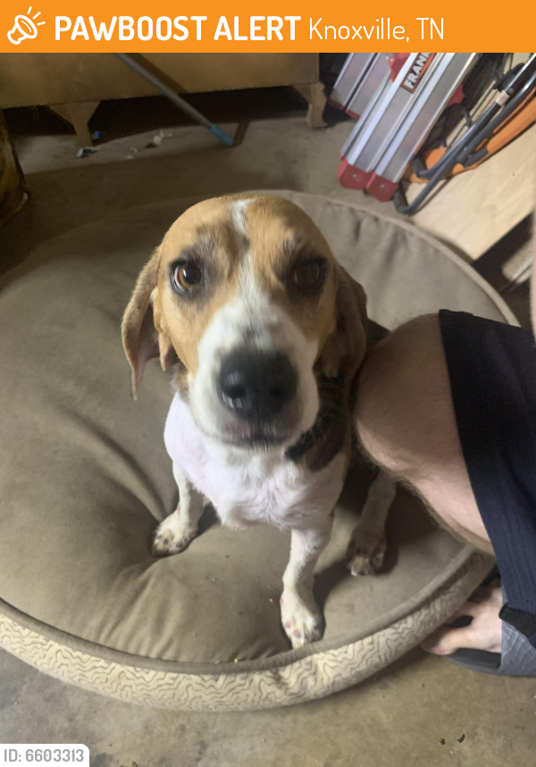 Found/Stray Dog in Knoxville, TN 37934 (ID: 6603313 ...
