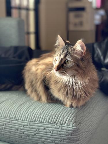 Lost Female Cat last seen W Walnut and N Ashland, Green Bay, WI 54303
