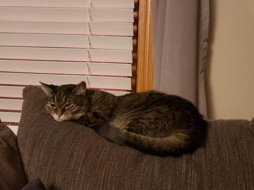 Lost Female Cat last seen Lakeshore BLVD , Eastlake, OH 44095
