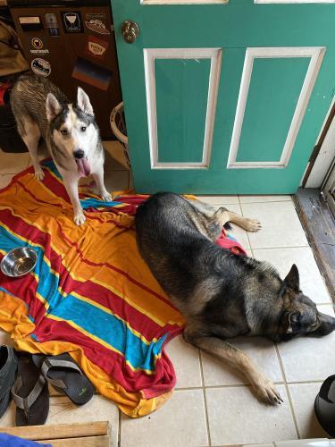 Found/Stray Male Dog last seen W Little Creek Rd & Newport Ave, Norfolk, VA 23505