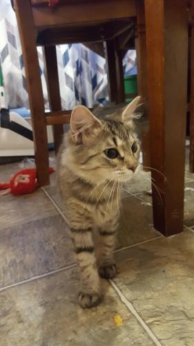 Found/Stray Unknown Cat last seen Traverse road (Abbingdon Landing townhouses), Newport News, VA 23665