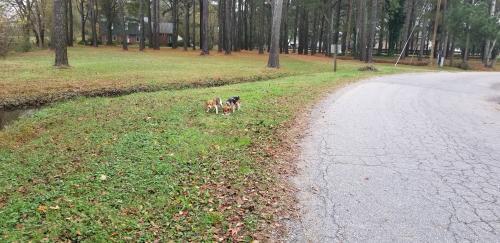 Found/Stray Unknown Dog last seen Beaver Dam Rd, Chesapeake, VA , Chesapeake, VA 23322