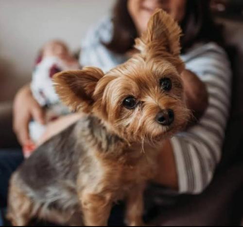 Lost Male Dog last seen Sunnyvale rd/ duncan perry, Grand Prairie, TX 75050