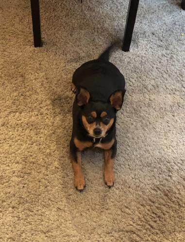 Lost Male Dog last seen 36th Street/Warwick Blvd, Newport News, VA 23607