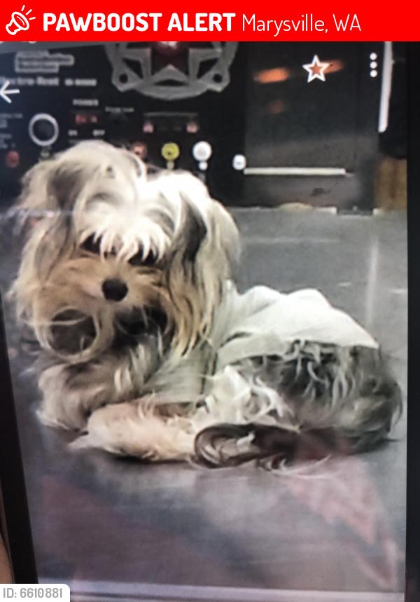 Lost Female Dog in Marysville, WA 98271 Named Sweetie (ID ...