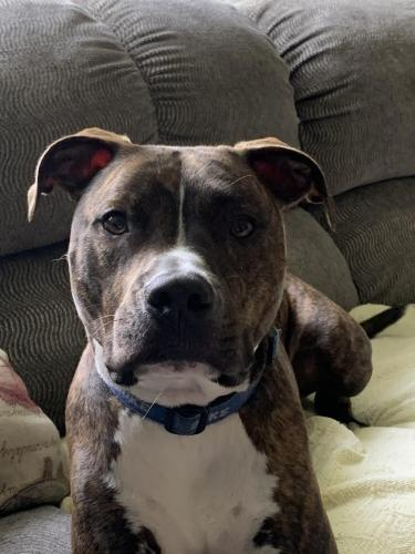 Lost Male Dog last seen Bird neck and Virginia Beach , Virginia Beach, VA 23451