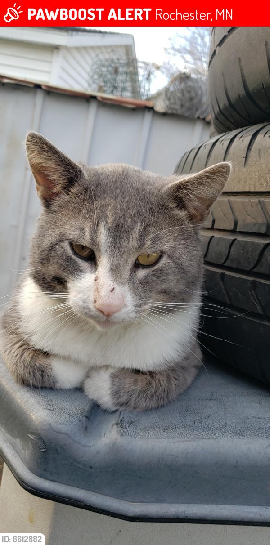Lost Male Cat last seen 4th street, Rochester, MN 55904