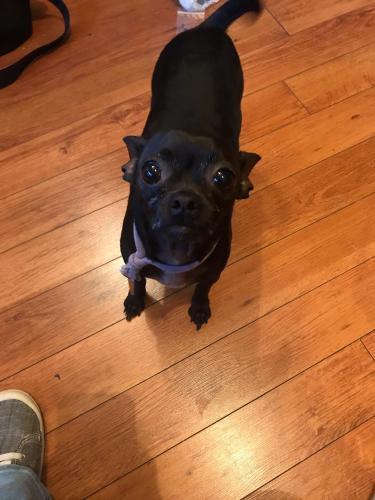 Lost Female Dog last seen Arkansas  and little road, Arlington, TX 76013