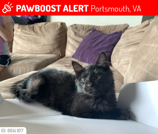 Lost Female Cat last seen Effingham st. And Crawford st. across from naval hospital, Portsmouth, VA 23704