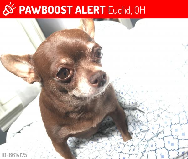 Lost Female Dog last seen E. 215th st, E 211th, Euclid, OH 44123