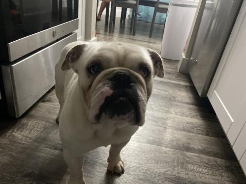 Lost Male Dog last seen Sanford, Arlington, TX 76011