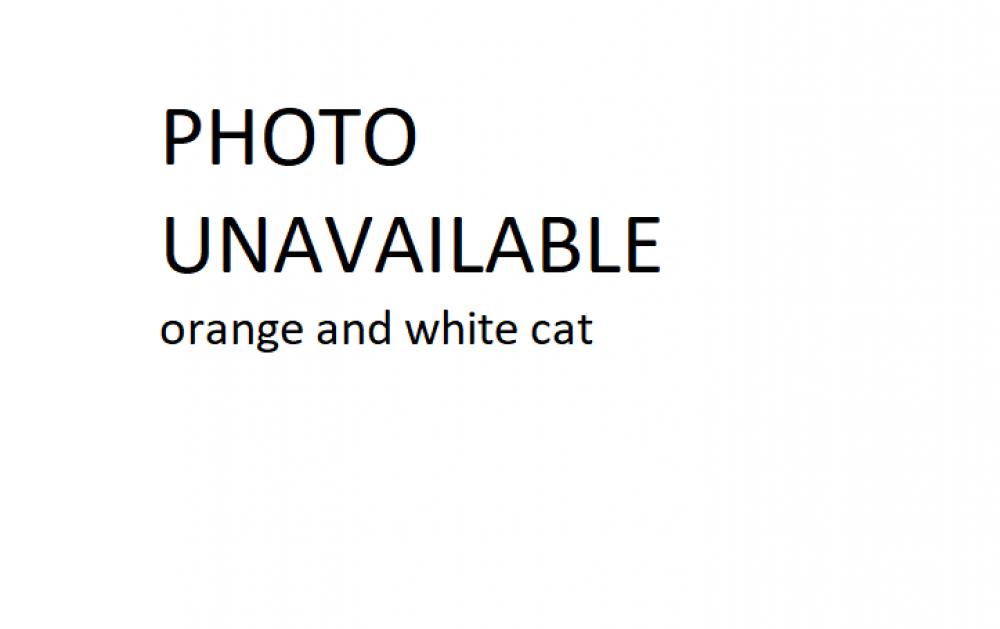 Found/Stray Male Cat last seen providence rd and paramount ave, Chesapeake, VA 23325