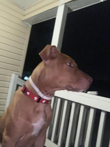 Lost Male Dog last seen Pleasure House / Shore Drive Va beach , Virginia Beach, VA 23455
