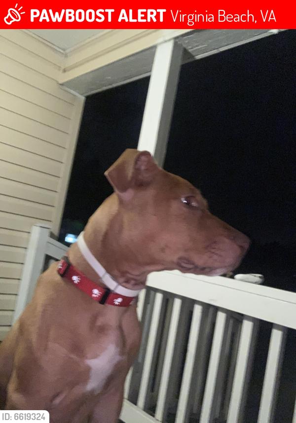 Lost Male Dog last seen Pleasure House / Shore Drive Va beach , Virginia Beach, VA 23455