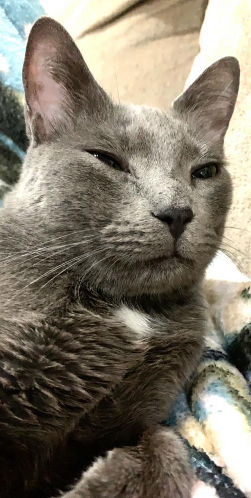 Reunited Male Cat last seen Leacrest and huntington, Arlington, TX 76010