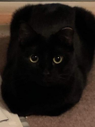 Lost Female Cat last seen Kearney Ave, Old Bridge Township, NJ 08816