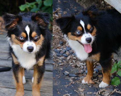 Lost Female Dog last seen Buckeye Rd. / Woodhill Rd., Cleveland, OH 44104, Cleveland, OH 44104