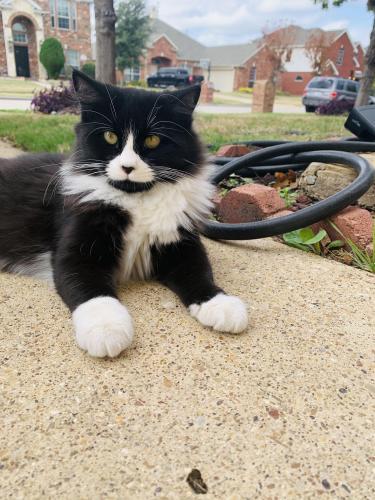 Found/Stray Unknown Cat last seen Lake Ridge, Grand Prairie, TX 75050