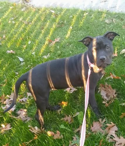 Lost Female Dog last seen Smoke City 5800 South Collins, Arlington, TX 76018