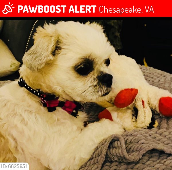 Lost Female Dog last seen Culpepper Landing, Chesapeake, VA 23323