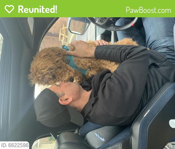 Reunited Female Dog last seen Herman Avenue, Cleveland, OH 44102