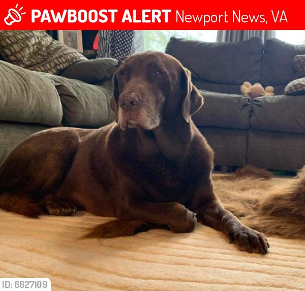 Lost Female Dog last seen Near belray drive, Newport News, VA 23601