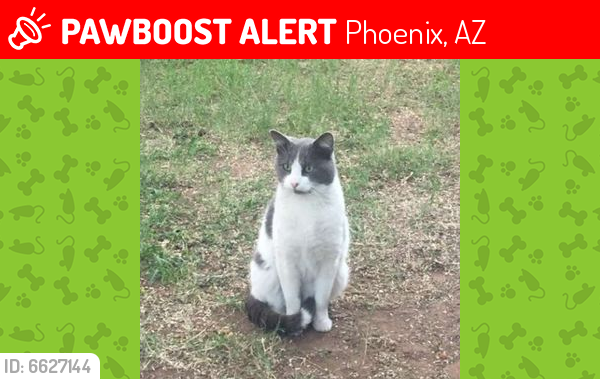 Lost Male Cat last seen Linden Ln, near Arizona Country Club, Phoenix, AZ 85018