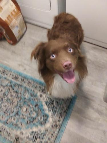 Found/Stray Unknown Dog last seen Renwick Club Townhmes, Crest Hill, IL 60435