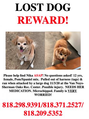 Lost Female Dog last seen Van Nuys Park , Los Angeles, CA 91423