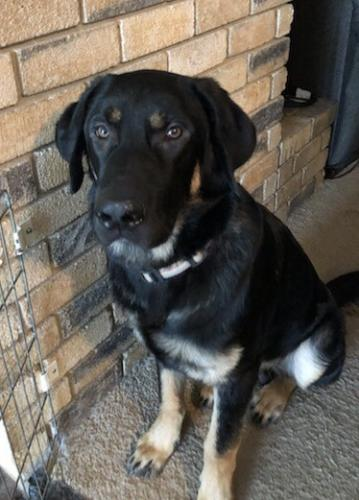 Lost Male Dog last seen SW Shopping plaza@ Allbertsons Near Green Oaks & Little Rd in SW Arlington, Arlington, TX 76016