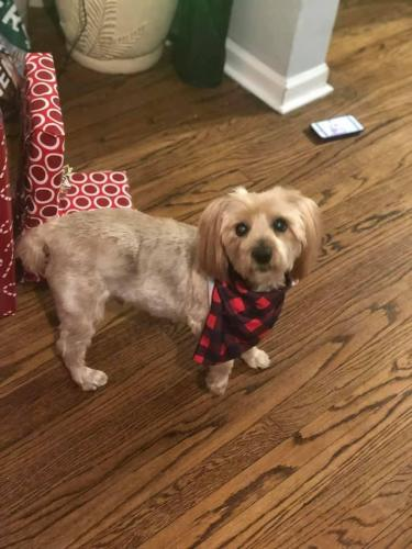 Lost Male Dog last seen 79th damen, Chicago, IL 60620